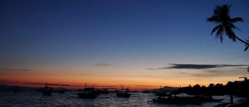 panglao, filippinerne, dykning, skildpadder, palmer, strand, snorkling