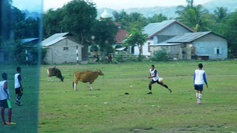 Fodbold mellem køerne!