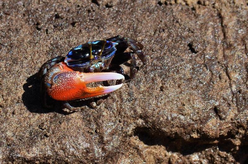 Der var fyldt med smukke farverige krabber