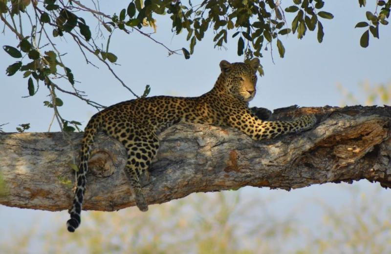 1. Chobe National Park 1 (29)