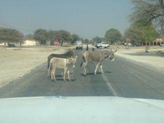 7. Makgadikgadi Pans National Park (47)