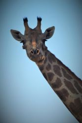 1. Chobe National Park (44a)