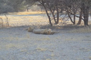 6. Central Kalahari Game Reserve (211)