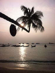 thailand, palme, kokosnød, strand, solnedgang