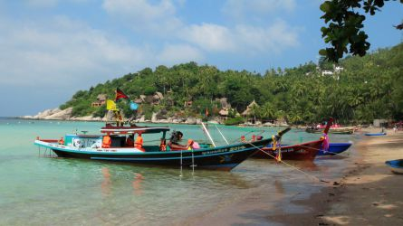 thailand, palme, kokosnød, strand, koh tao, båd