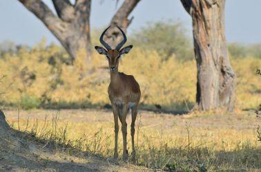 1. Chobe National Park 1 (17)