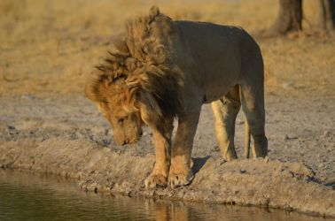 6. Central Kalahari Game Reserve (174)