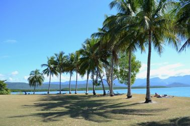 Australien, palmer, palms, strand, beach