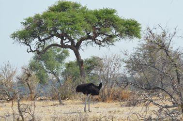 7. Makgagikgadi National Park 1 (66)