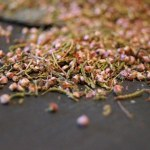 Dried heather for brewing