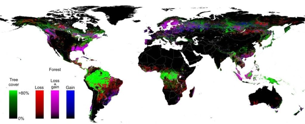 First high-resolution global map of forest extent, loss and gain - Updating Annually