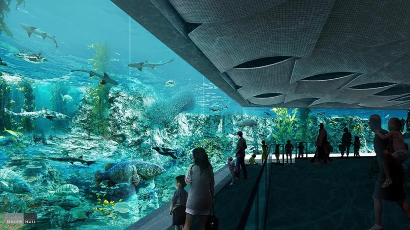 Underwater viewing area for African penguins and other aquatic life