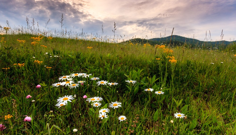 Wildflowers in Cades Cove