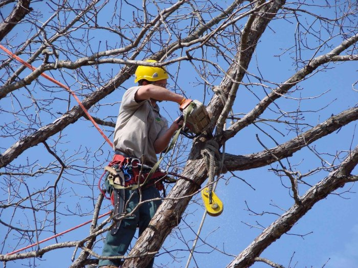 Tree Removal Tips 2