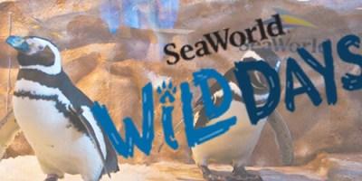 seaworld feat img 2