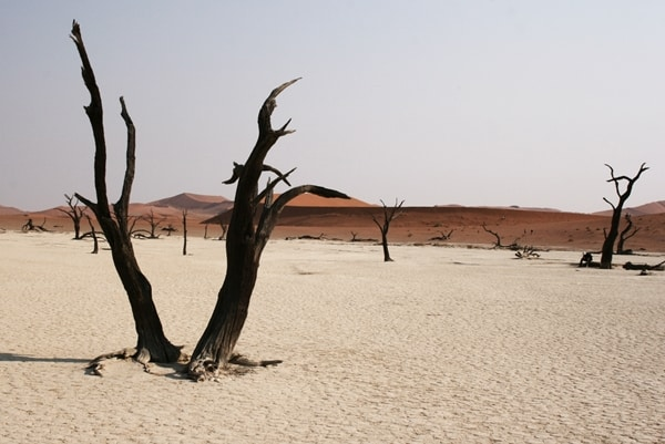 Sossusvlei: the graveyard of trees in Namibia's Namib Desert, Africa