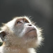 Monkey at the Batu Caves