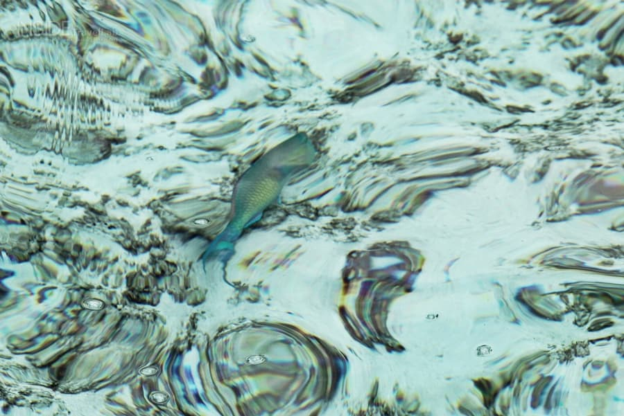 Maldives fish in water
