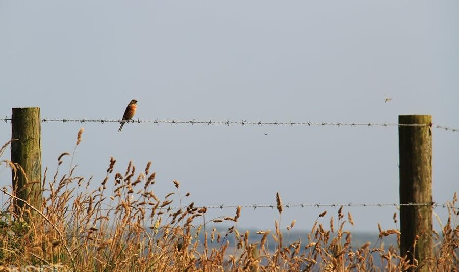 Bird in Pembrokeshire