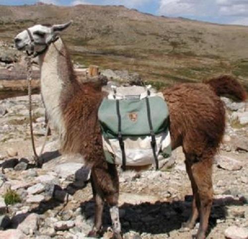 Go llama packing