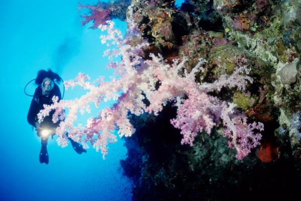 Print_39-Diving-Red-Sea