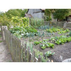 Captivating Backyard Vegetable Garden Vegetable Gardening Mistakes To Avoid Vegetables Vertical Gardening