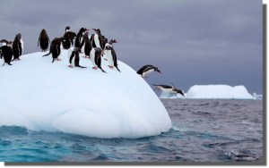 Penguins jumping with shadow