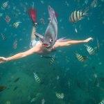 underwater-fish-photobomb-animal-photobombs.jpg