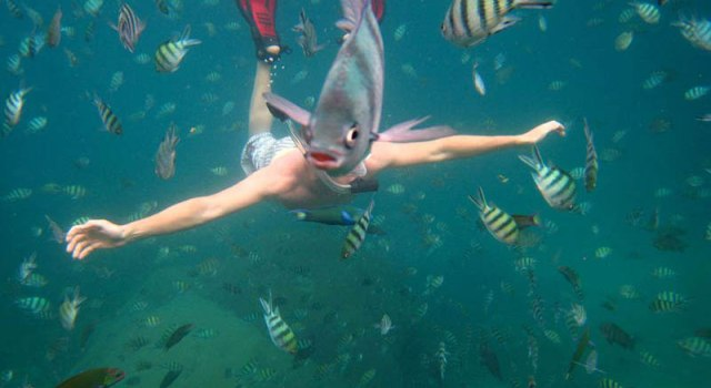 underwater-fish-photobomb-animal-photobombs.jpg