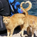 cats-heart-shape-with-tail-perfect-timing.jpg