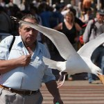 seagull-takes-ice-cream-perfect-timing.jpg