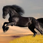 black-colour-beautiful-horse_Horses Photography