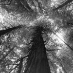 Famous_Photographs_of_Trees_by_Beth_Moon (1)