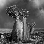 Famous_Photographs_of_Trees_by_Beth_Moon (12)