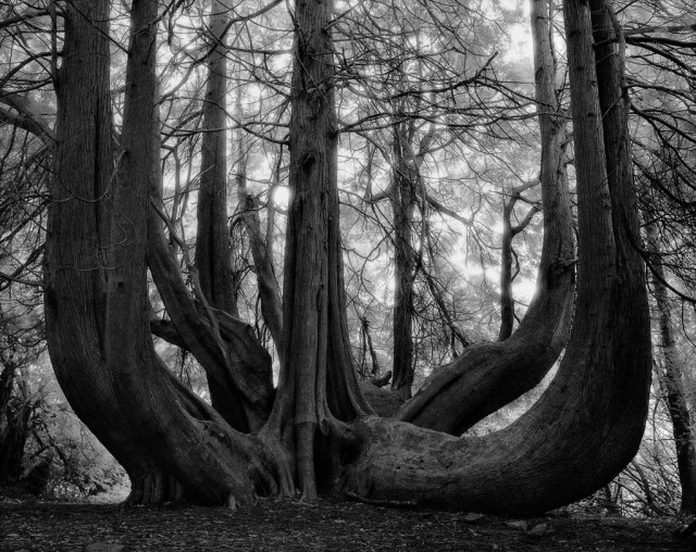 Famous_Photographs_of_Trees_by_Beth_Moon (17)