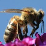 bee three segments P