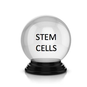 Image result for stem cell struggle