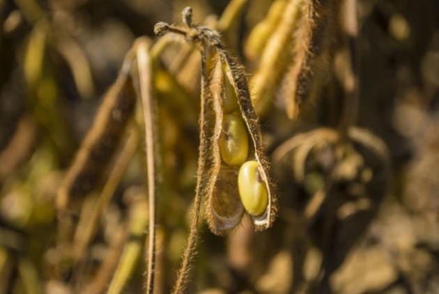 Ο «πράσινος χρυσός» για τον οποίο μιλά η κυβέρνηση έχει διαλύσει την αγροτική παραγωγή της χώρας και τις ζωές χιλιάδων αγροτών