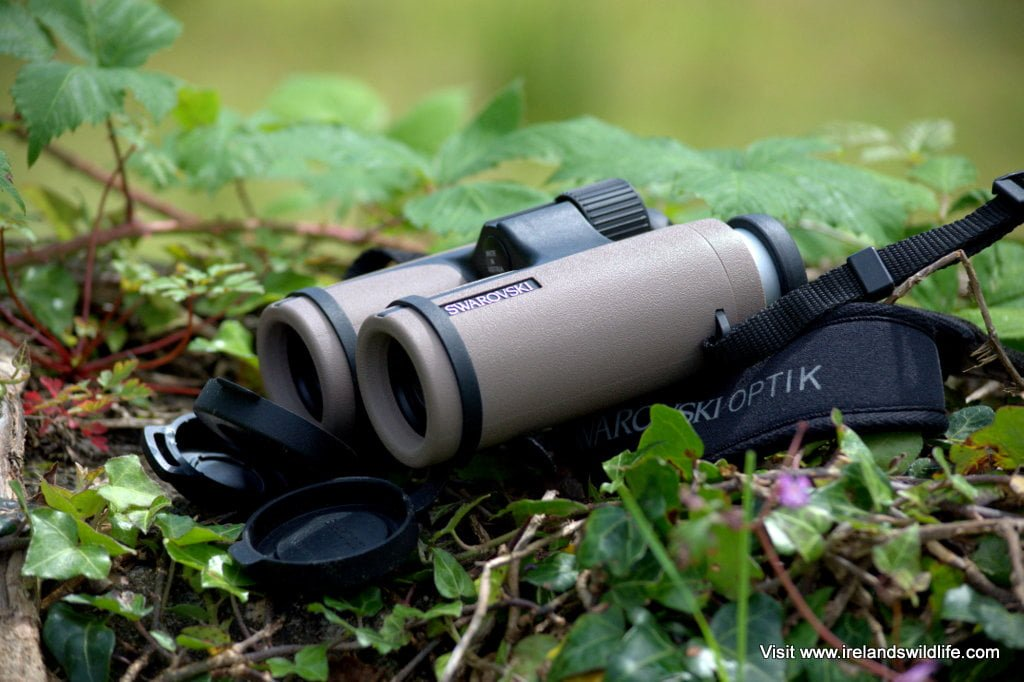 Swarovski CL Companion 10x30 binocular review
