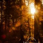 Bunt sind schon die Wälder – Spaziergang im Harz