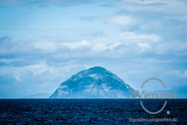 Ailsa Craig –  15 km vor der Küste, wo zigtausende Tölpel brüten