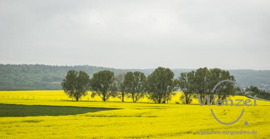 Yellow RAPSodie - das wunderbare GELB der blühenden RAPSfelder