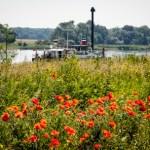 Entlang der Elbe – Spaziergang zwischen Salbker See und Buckau