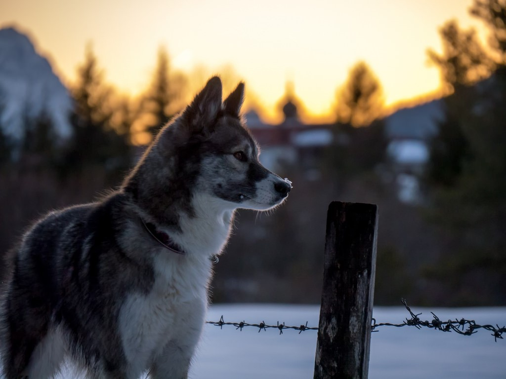 Fullsize Of Calm Dog Breeds