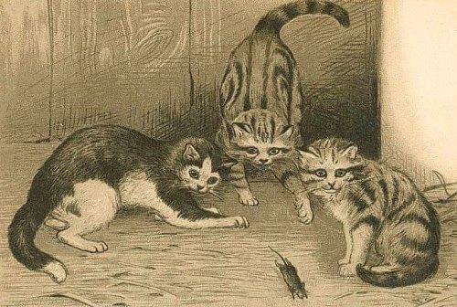 Chat-Rat