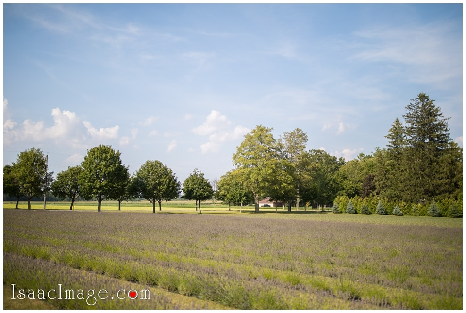 Bonnieheath estate lavender winery Engagement_3378.jpg