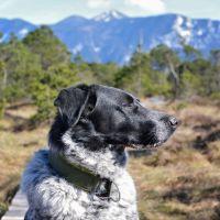 Isarhunderunde 15: Schöne Aussichten im Murnauer Moos