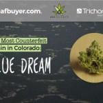 The Most Counterfeit Strain in Colorado: Blue Dream!