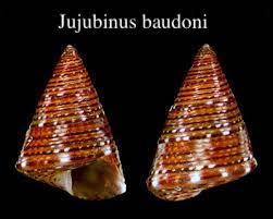 Jujubinus baudoni