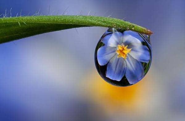 dewdrop2